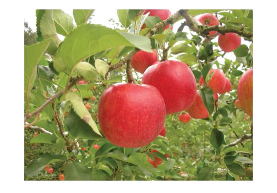 ぐんまのりんご